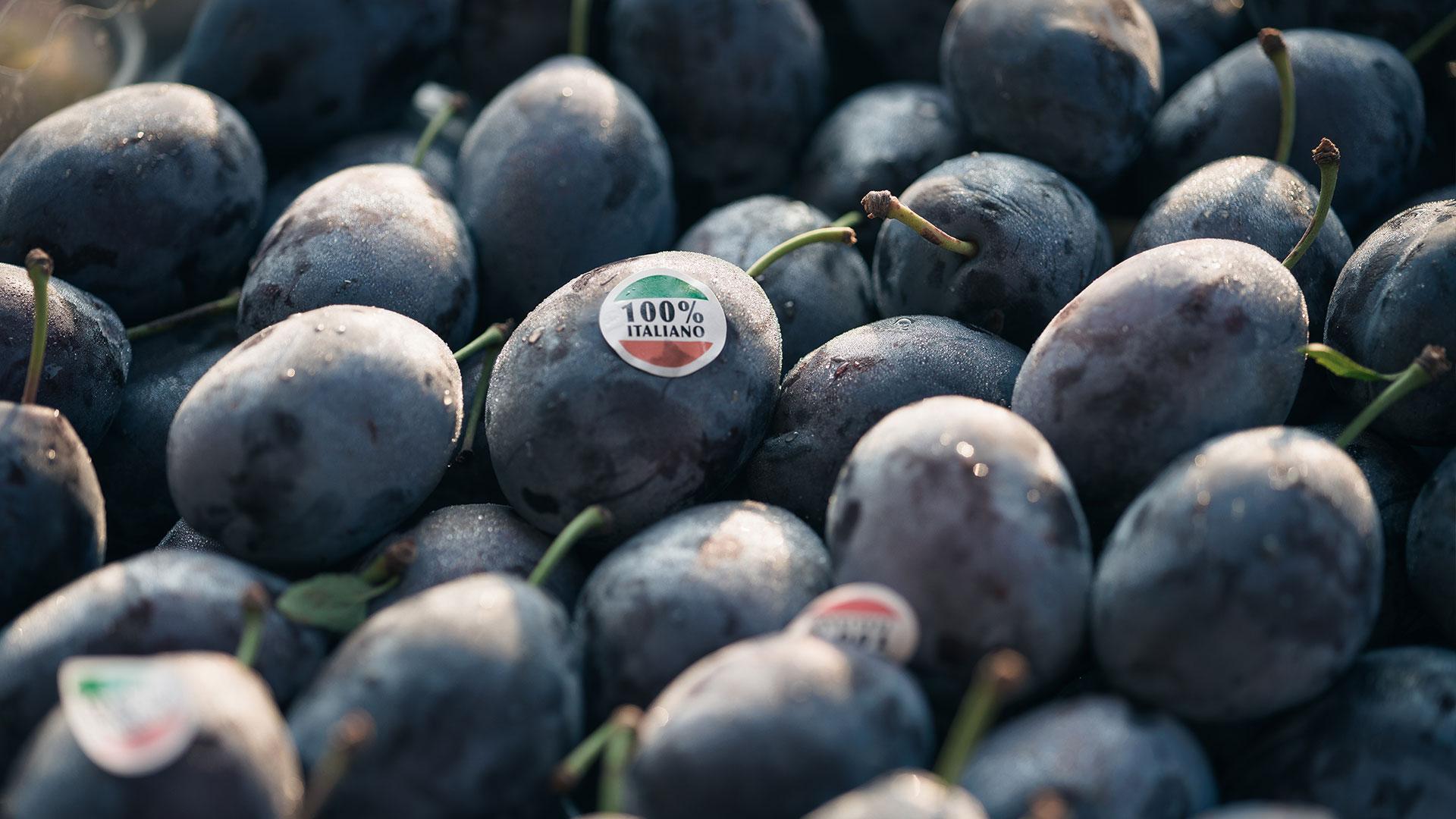 Prugne italiane fornite all'ingrosso | Due Erre