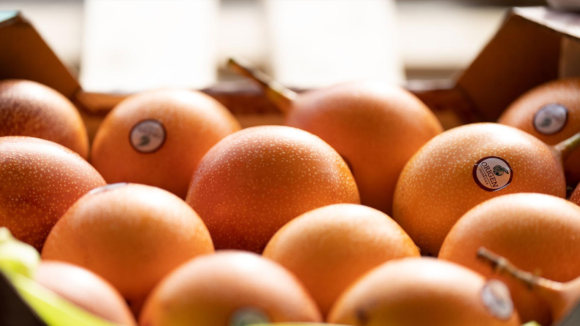 Frutta tropicale import export Due Erre Padova