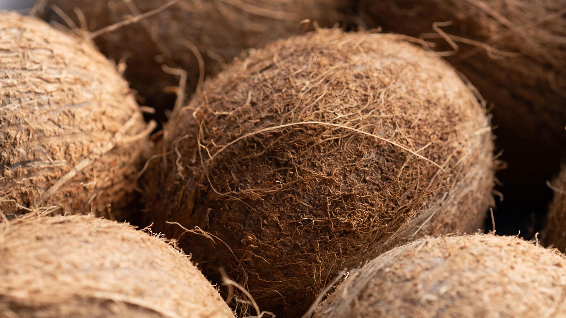 Cocco, frutta tropicale all'ingrosso Due Erre
