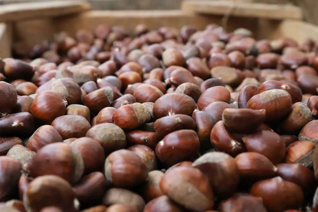 Benefici e proprietà delle castagne