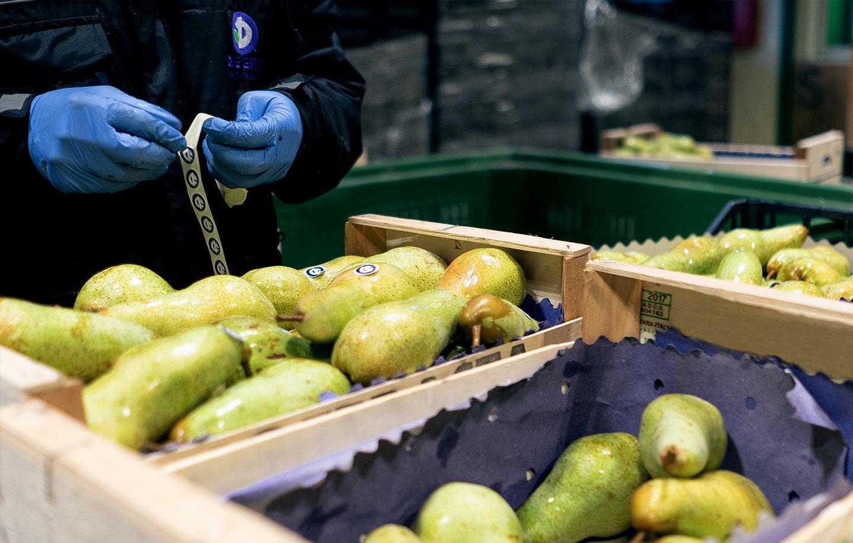 Ricondizionamento frutta e verdura all'ingrosso Due Erre Padova