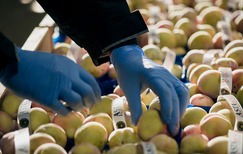 Ricondizionamento frutta e verdura in molte misure e pesi per le diverse esigenze