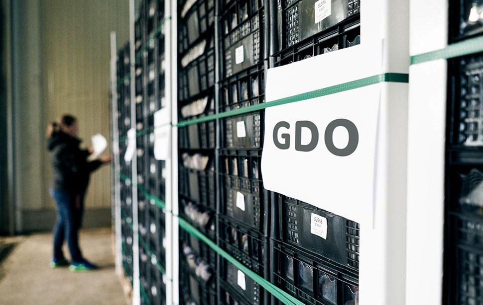 Servizi dedicati alla GDO, fornitura frutta e verdura Due Erre