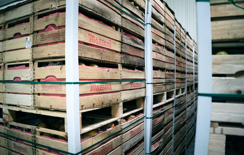 Cassette di frutta stoccate in magazzino, servizi Due Erre