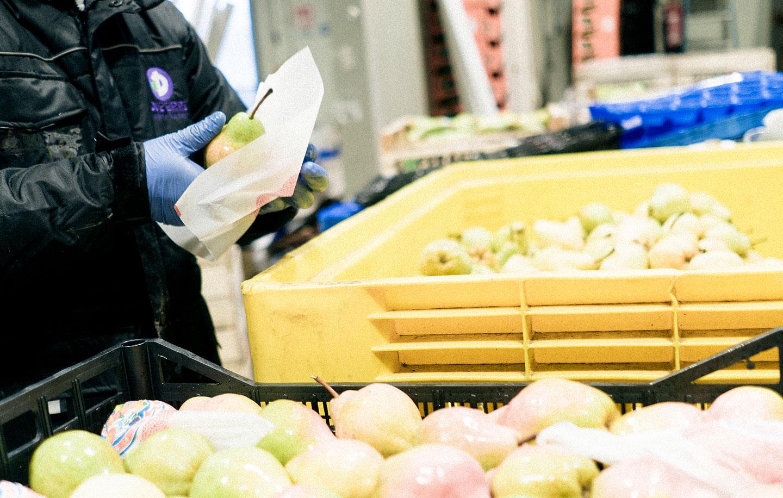 Ricondizionamento frutta e verdura all'ingrosso Due Erre