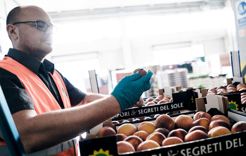 Verifica e controllo frutta e verdura venduta all'ingrosso Due Erre