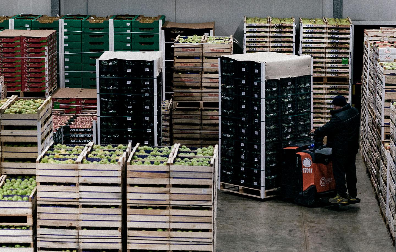 Movimentazione e pallettizzazione frutta e verdura all'ingrosso, Due Erre