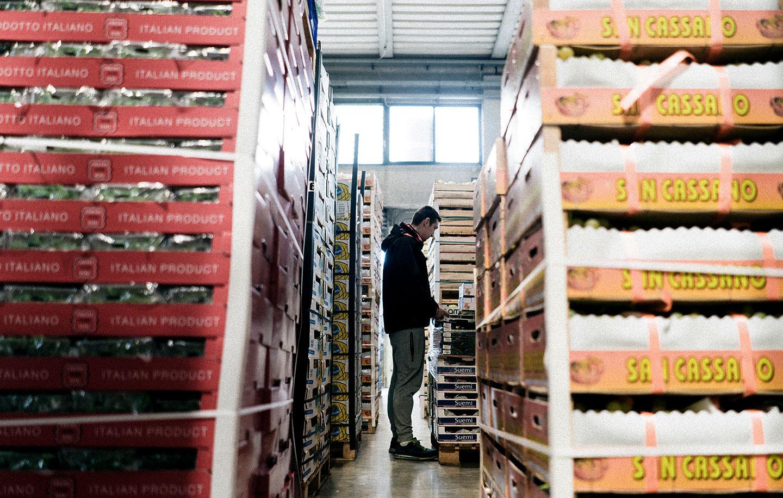 Servizi dedicati per l'import export di frutta e verdura, Due Erre