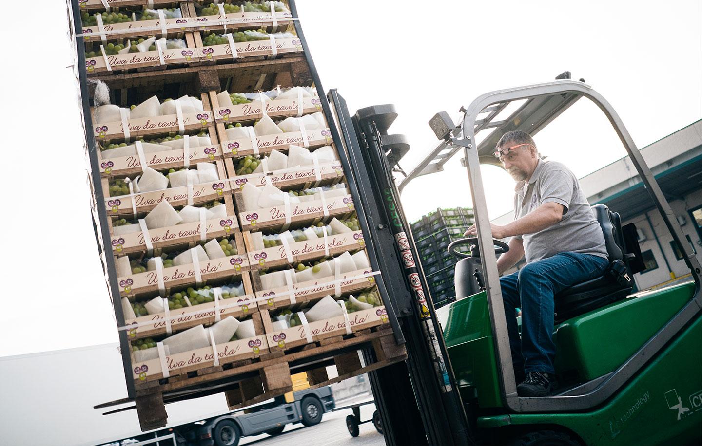 Servizio logistico ingrosso frutta e verdura Due Erre